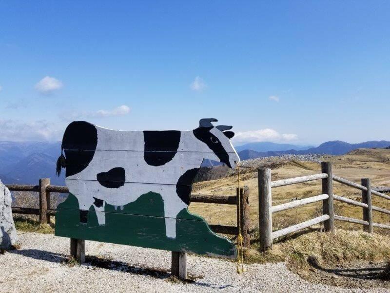 四国カルスト 姫鶴平の牛さんパネル