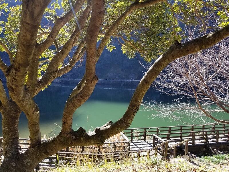 グリーンパル日向神峡 林間広場からのダム湖