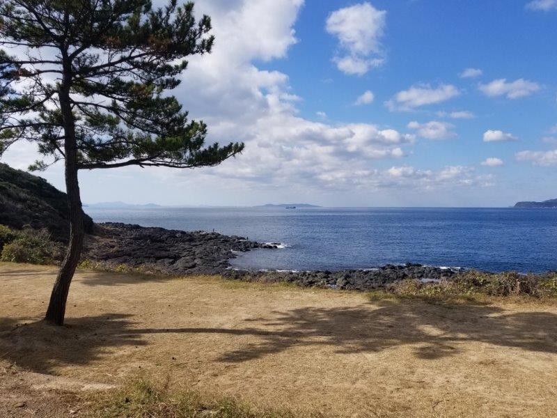 波戸岬キャンプ場フリーサイトから見える海
