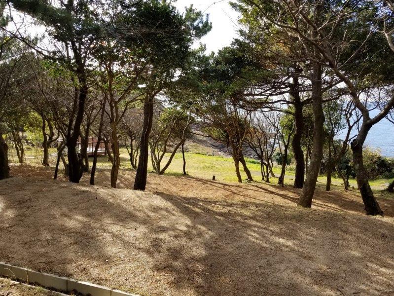 波戸岬キャンプ場一般サイトL8