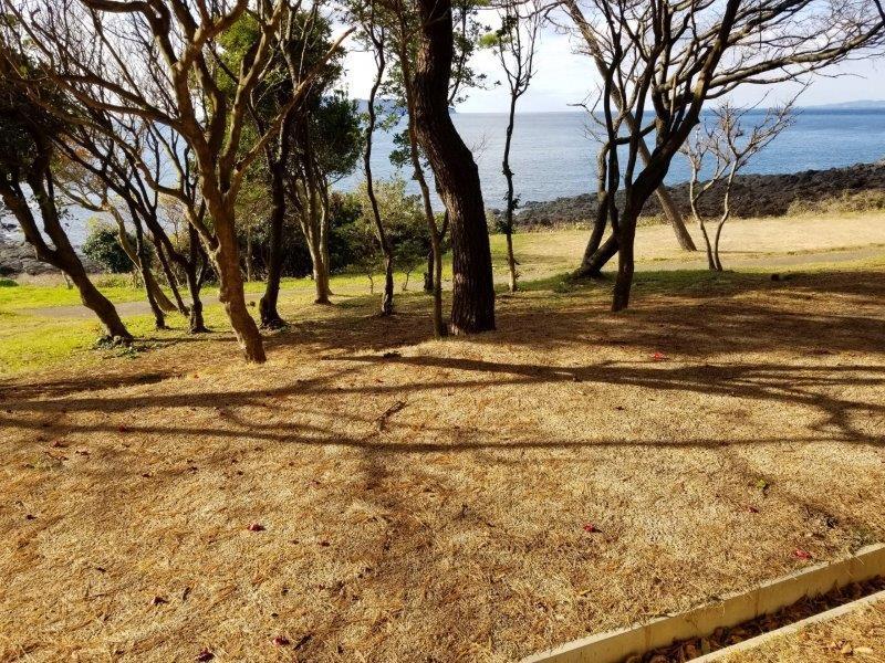 波戸岬キャンプ場一般サイトL9