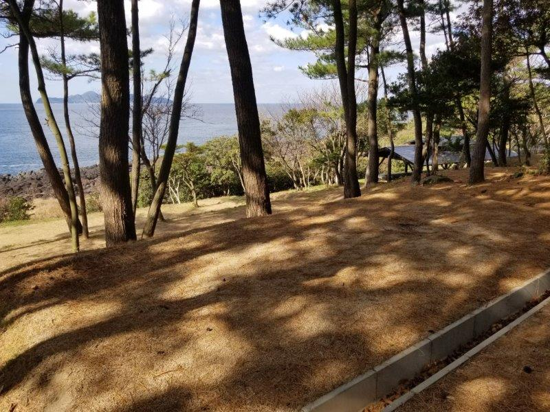 波戸岬キャンプ場一般サイトM6