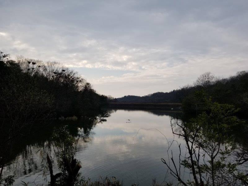夕方の水鳥池