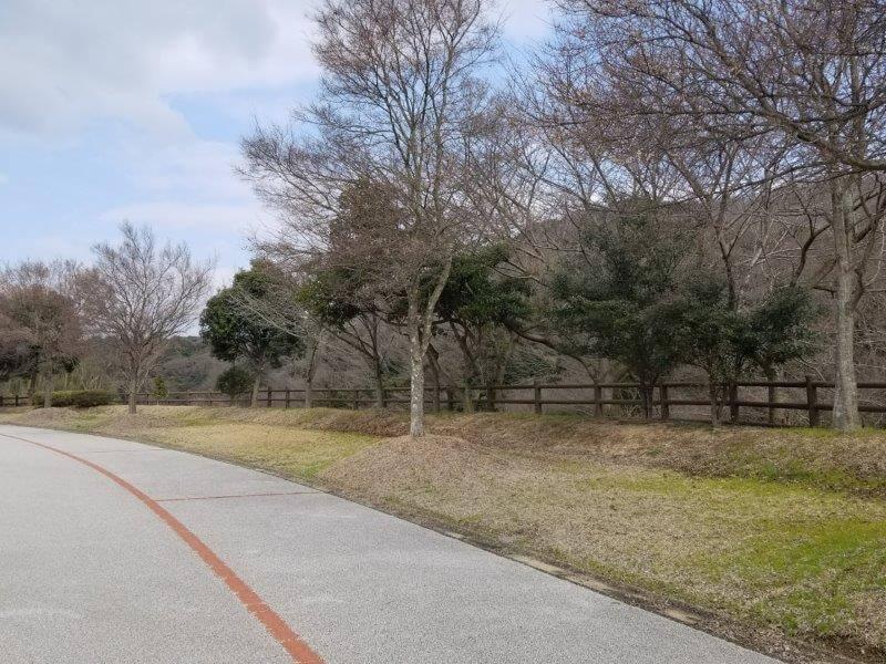 竜王山公園オートキャンプ場 広場サイト 19番