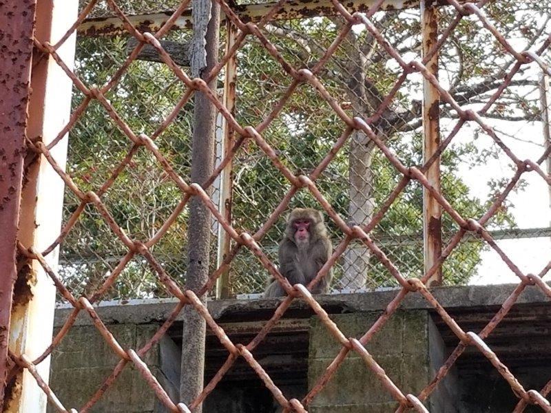 ゆのまえグリーンパレスのお猿さん