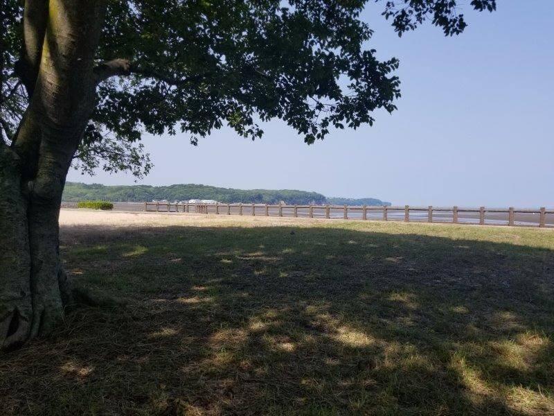 糸ヶ浜海浜公園の木陰