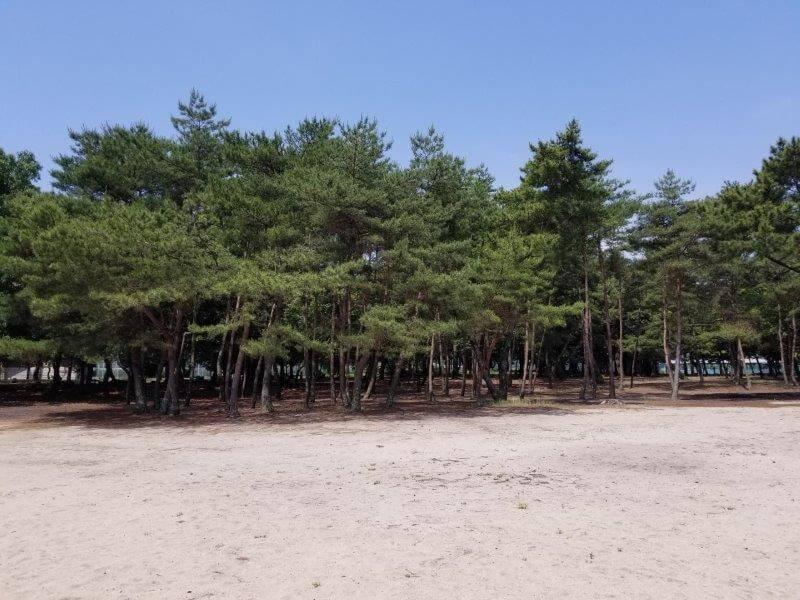 糸ヶ浜海浜公園の林間フリーサイト