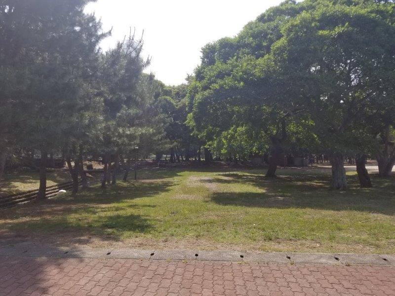 糸ヶ浜海浜公園の海側フリーサイト