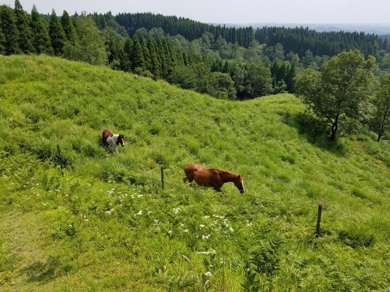 蔵迫温泉さくらキャンプ場のすぐ側に馬がいる