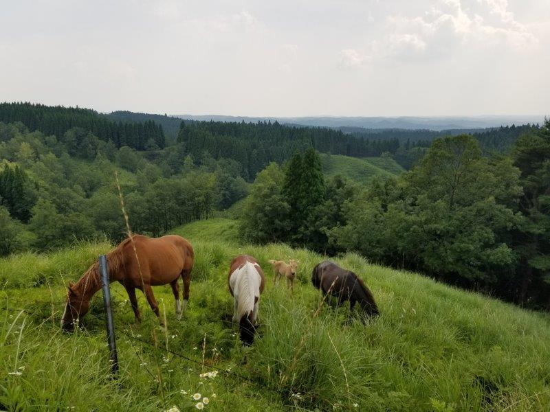 蔵迫温泉さくらキャンプ場のすぐ側に仔馬も発見