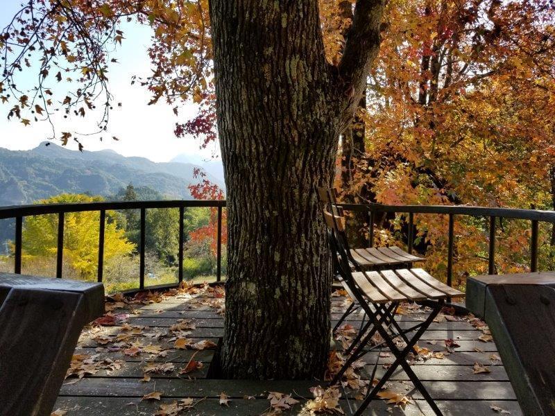 バルンバルンの森 ツリーハウスに上ってみた