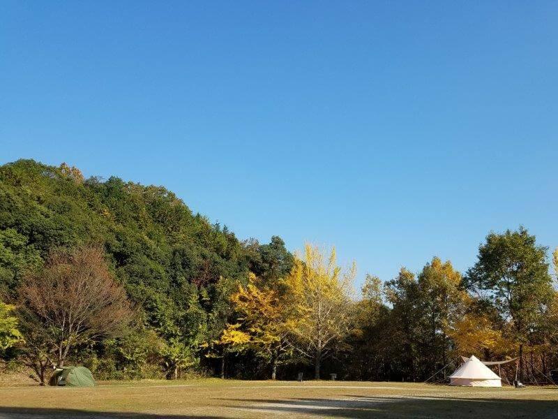 バルンバルンの森 星空満天フリーサイト