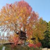 バルンバルンの森にあるツリーハウス