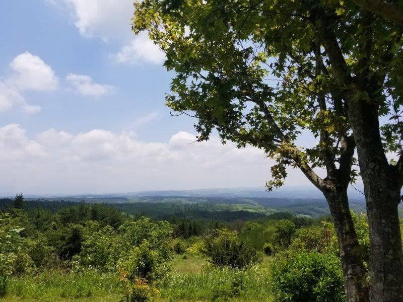 ゴンドーシャロレー CサイトのC4からの景色