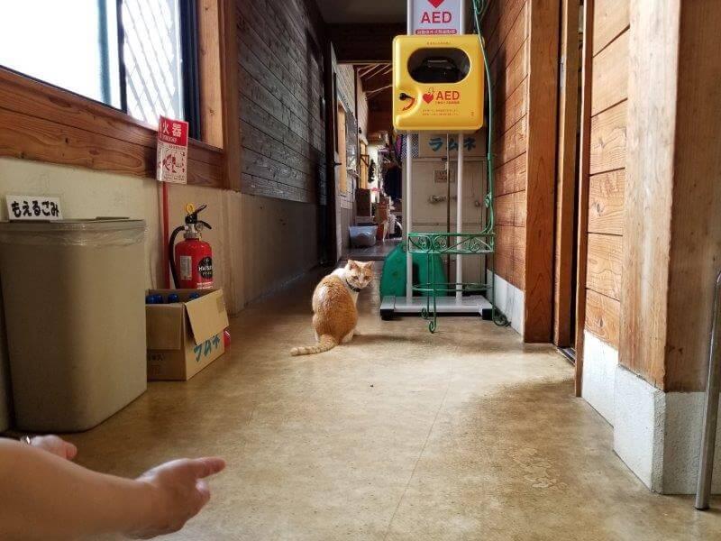 伊佐ノ浦公園の看板猫いさみちゃん