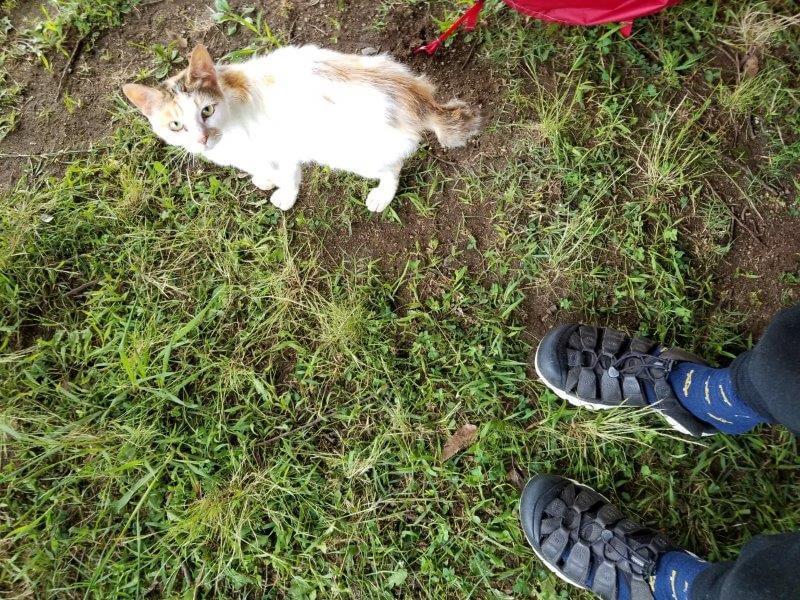 伊佐ノ浦公園の野良猫ちゃん