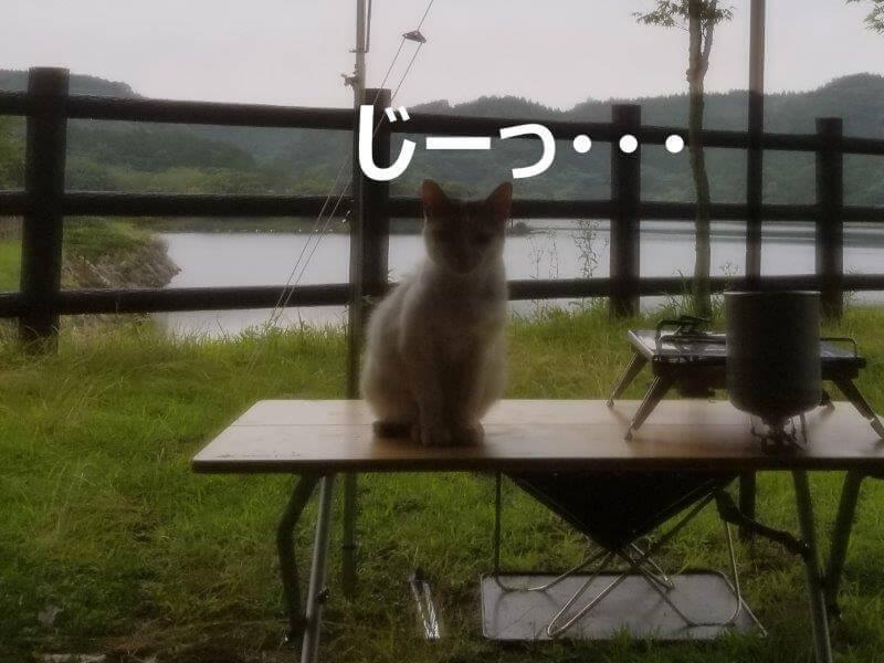 伊佐ノ浦公園の野良猫ちゃんに見つめられる