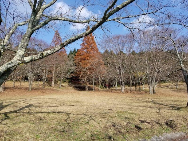 志高湖キャンプ場 テントサイト
