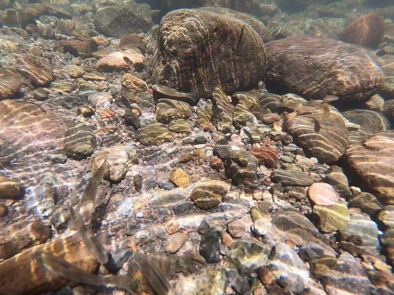 久住高原オートビレッジ:キャンプ日記 遊水峡には魚がいっぱい