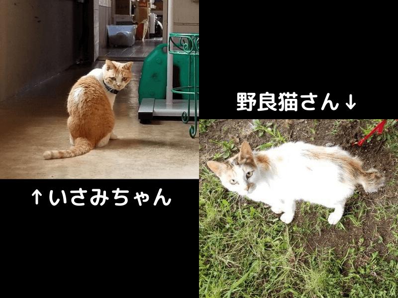 伊佐ノ浦公園にいる猫たち