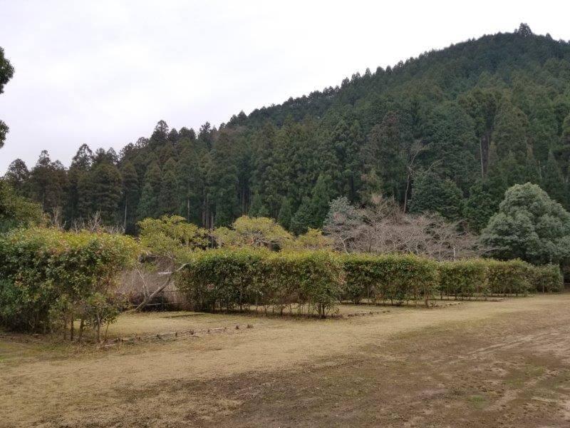 岩屋キャンプ場 区画サイト
