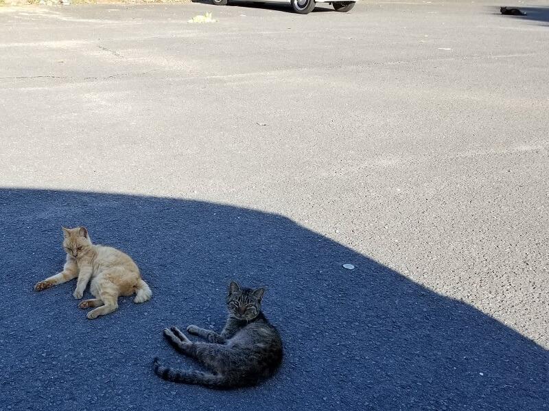 川原大池公園には猫がいっぱい