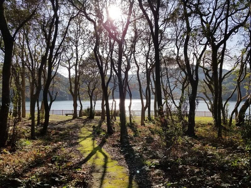 川原大池公園の保存林