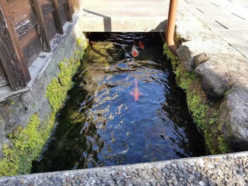 鯉の泳ぐまち(長崎県島原市)