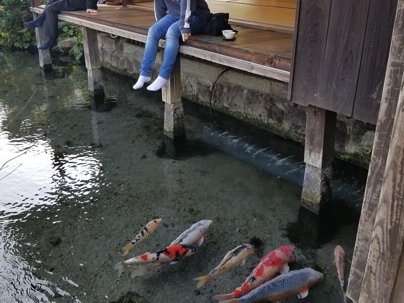 鯉の泳ぐまち 四明荘