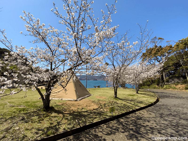 四本堂公園キャンプ場でお花見キャンプ