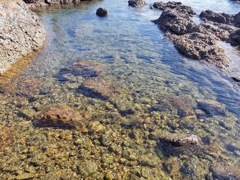 大島大橋公園の海が透き通っていた