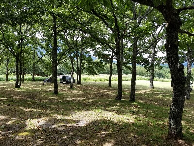 九重グリーンパーク泉水キャンプ村 オートキャンプサイト(林間サイトのエリア)