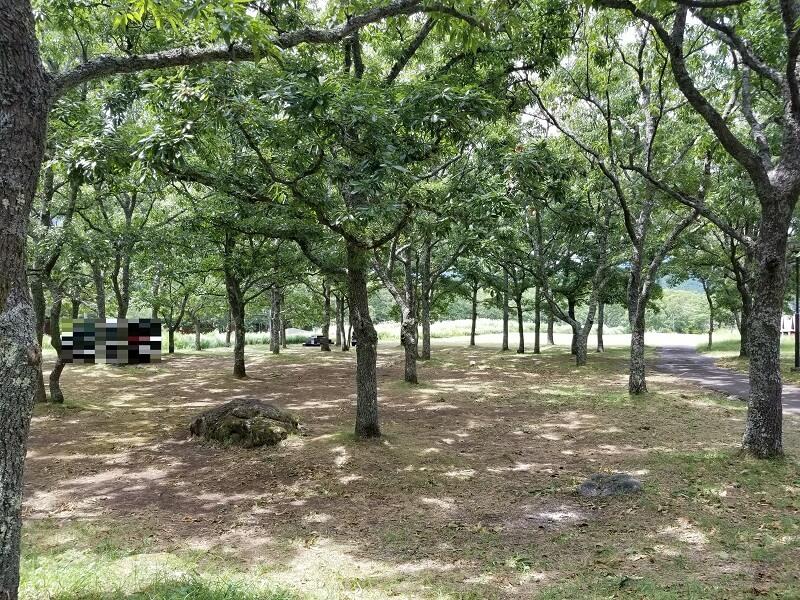 九重グリーンパーク泉水キャンプ村 オートキャンプサイト(Bエリアの林間サイト)