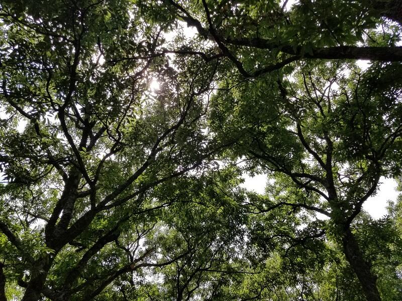 九重グリーンパーク泉水キャンプ村 オートキャンプサイト(Bエリア 林間サイトの木漏れ日)