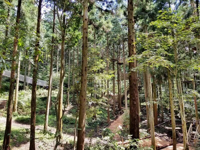 志高湖キャンプ場の隣にある フォレストアドベンチャー・別府