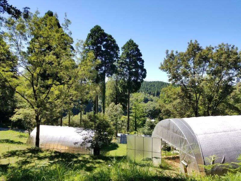 吉原ごんべえ村キャンプ場 全天候型ドームサイト8番サイトからの眺め