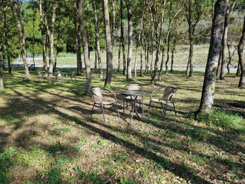 熊谷牧場・雛戸 ブルーベリー・キャンプガーデンのテントサイト内くぬぎ林