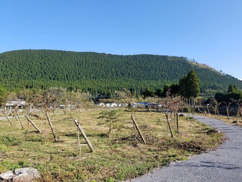熊谷牧場・雛戸 ブルーベリー・キャンプガーデン 桜ともみじの並木道