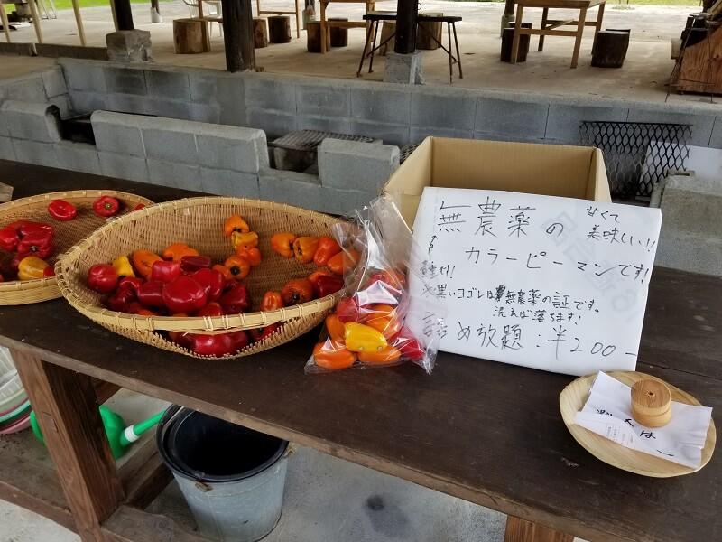 キャンプ&農園 玖珠の杜で販売されている無農薬ピーマン