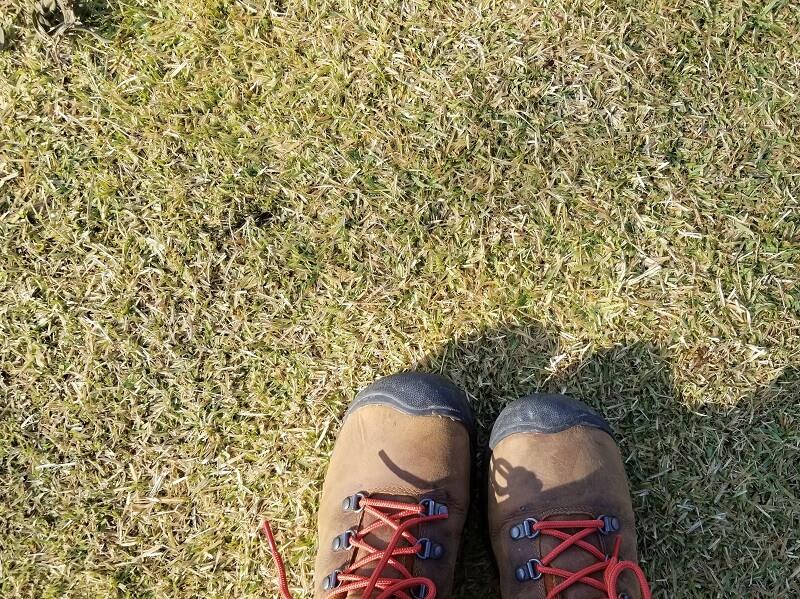 Camp & Cafe ルート61 テントサイトの芝生