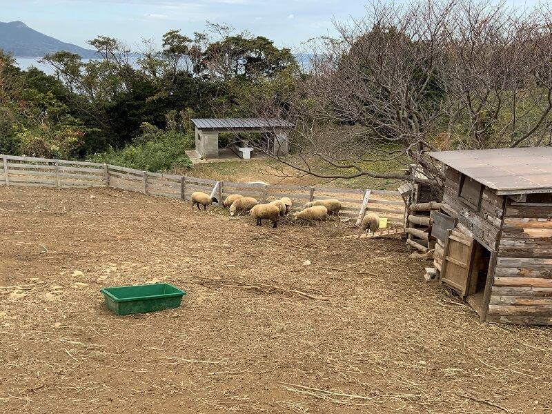 中瀬草原キャンプ場 羊さんの家