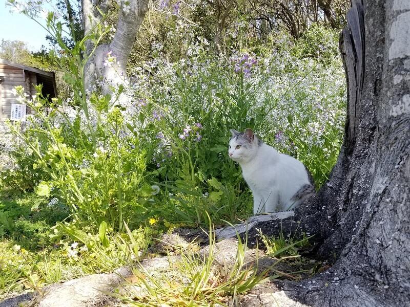 大崎自然公園キャンプ場のフリーサイトにいた白いネコちゃん