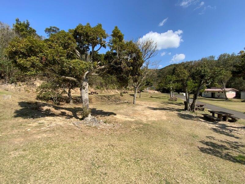 【大崎自然公園キャンプ場】フリーサイト 山側のサイト
