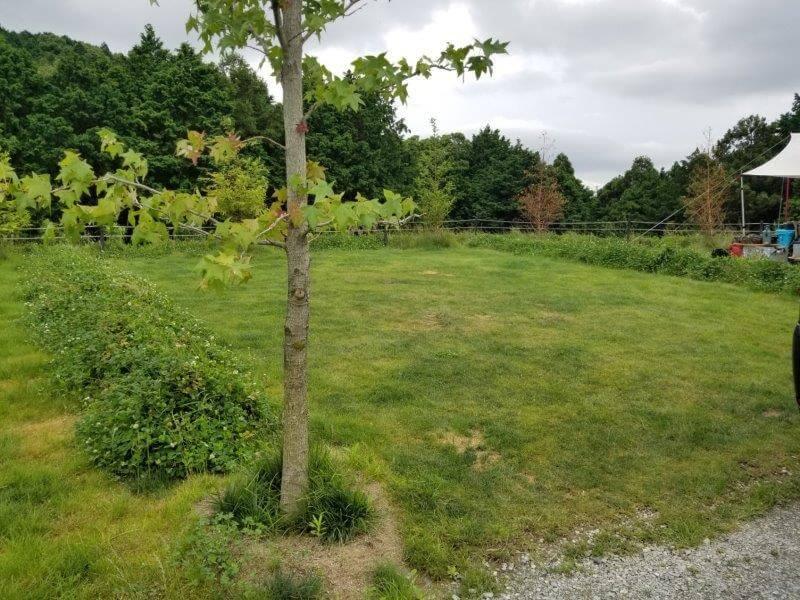 NORTH VALLEY(ノースバレー)キャンプサイト 芝生サイト3番